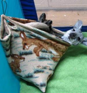 keeping and breeding kangaroos