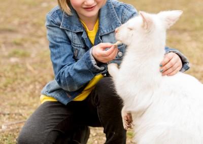 Albino Bennet Wallaby